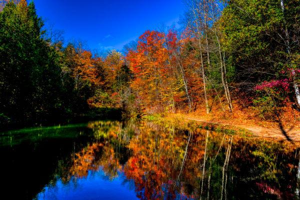 Ontario Autumn, Colored Reflections Photography Art   Rick Vyrostko Photography