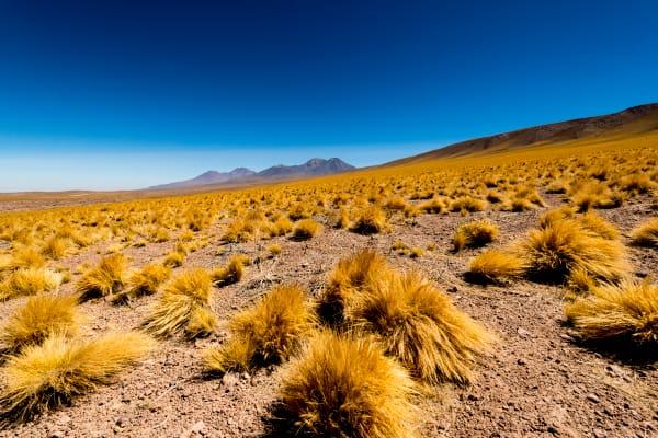 Atacama Field Of Golden Grasses Photography Art | Rick Vyrostko Photography