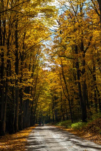 Ontario Autumn, Yellow Gold Magic Photography Art   Rick Vyrostko Photography