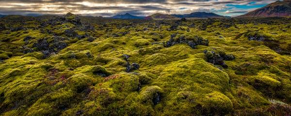 Icelandic Green Moss Photography Art   Rick Vyrostko Photography