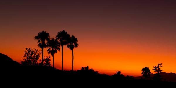 Palm Silhouettes In Santa Barbara Photography Art   Rick Vyrostko Photography