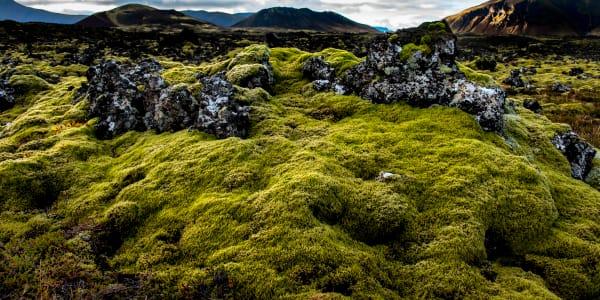 Icelandic Green Moss & Rock Photography Art | Rick Vyrostko Photography