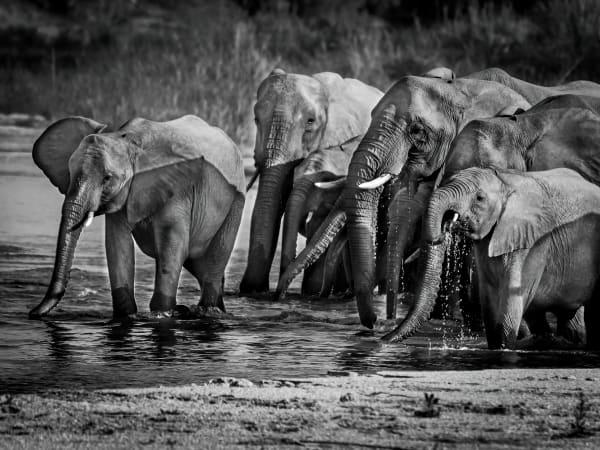 Elephant Refresher Photography Art | Rick Vyrostko Photography