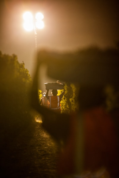 Night harvest in Napa Valley