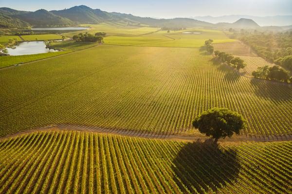Serene vineyard aerial photo