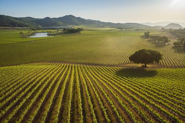 Napa Valley vineyard aerial photo