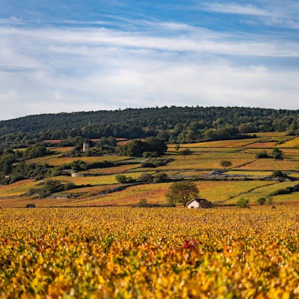 Cote de Beaune vineyards in autumn