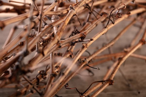 Dried grapevine canes