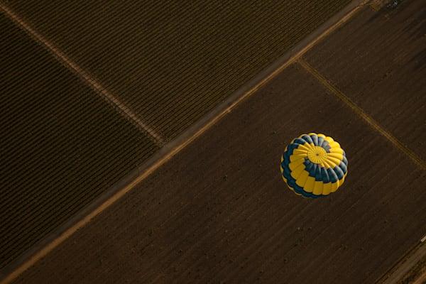 Hot air balloon flying over vineyard