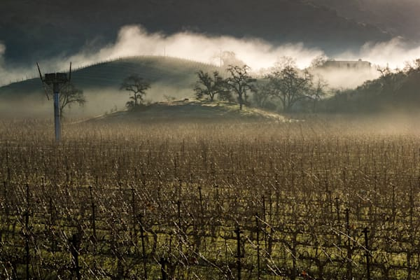 Brisk winter morning in Napa Valley