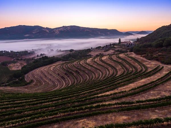 Foggy mountaintop vineyard