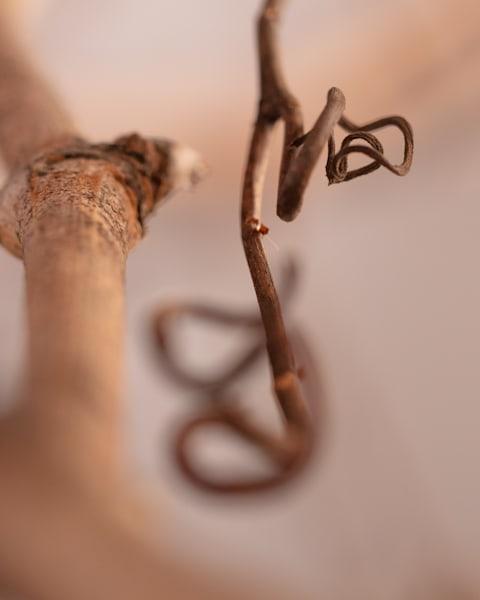 Macro photo of a grapevine
