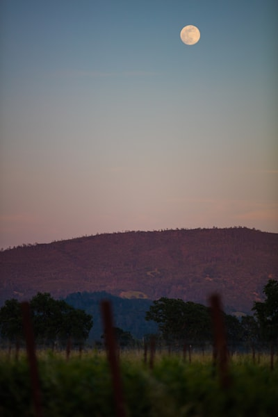Full moon over vineyard