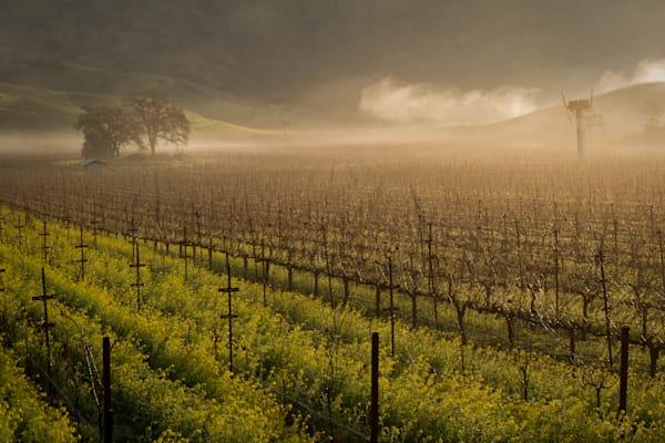 Winter morning in a vineyard