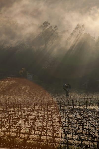 Melting the morning fog
