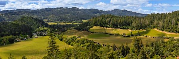 Saint Helena Vineyard panoramic