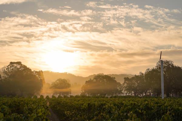 Sonoma Valley vineyard sunrise