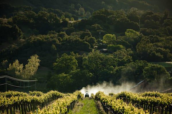 Farmer tilling vineyard