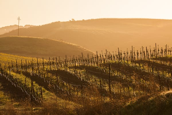 Rolling hills in Napa Valley