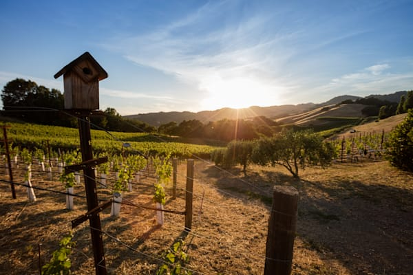 Birdhouse in Vineyard