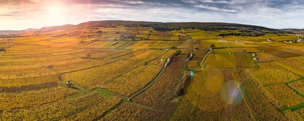 Cote D'Or, France vineyard panoramic