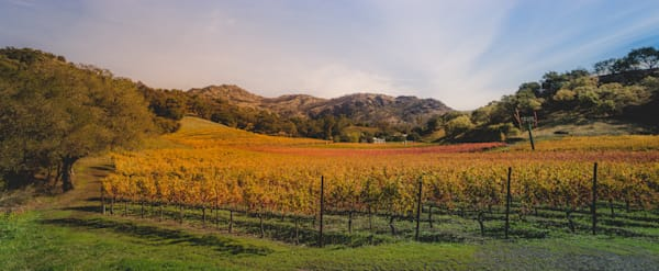 Stag's Leap Appellation vineyard panoramic
