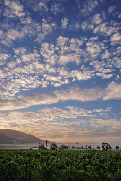 Sonoma Valley morning vineyard