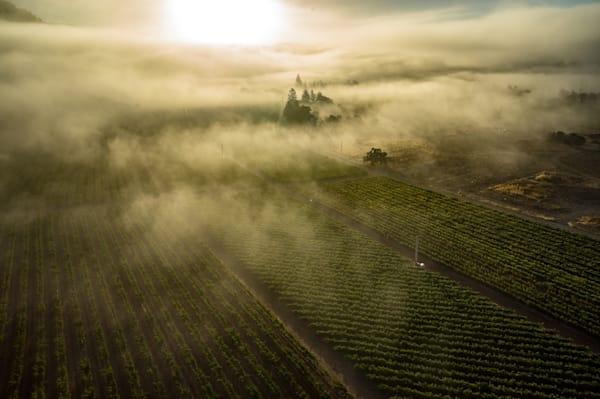 Foggy vineyard aerial photo