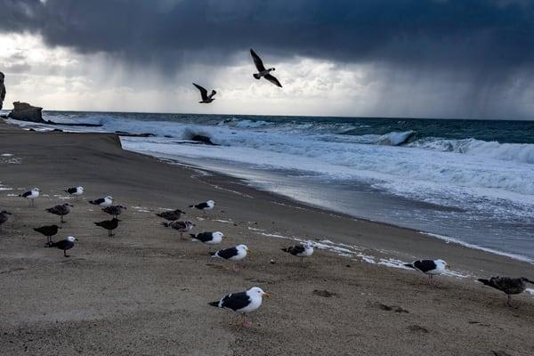 Birds in the storm