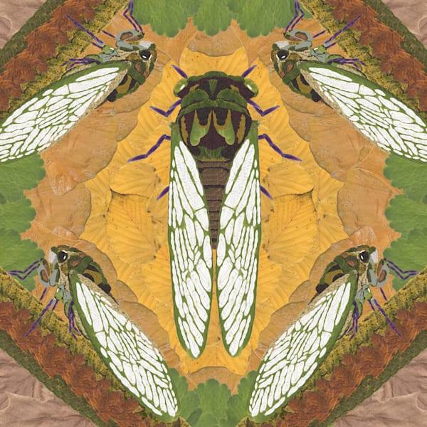 Cicada Art | smacartist