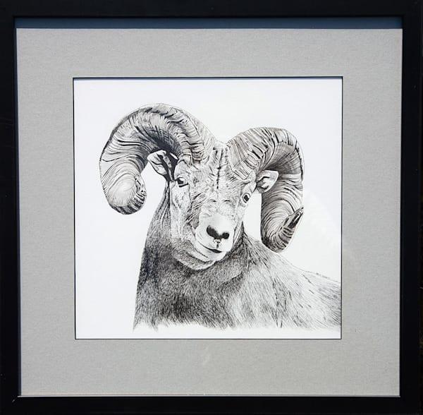 17. Big Horn Sheep Art   Kelly Corbett Artist
