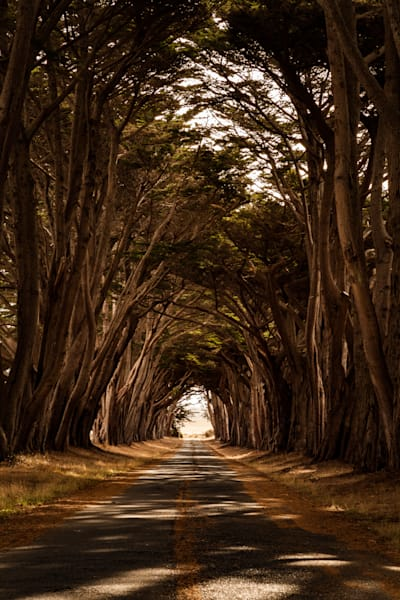 Tree tunnel, Pt. Reyes