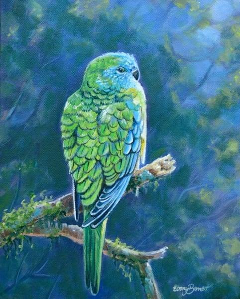 Turquoise Parrot - Blue Light