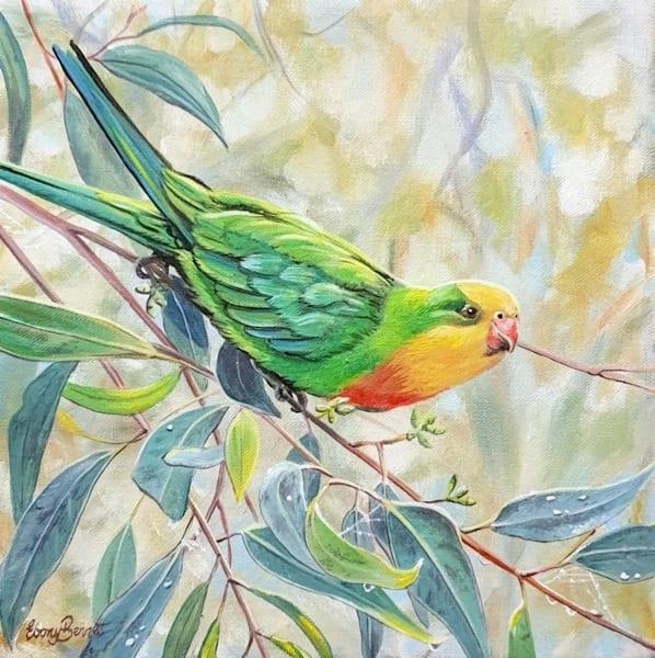 Superb Parrot - Golden Light