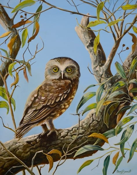 Whooo's There? - Boobook Owl