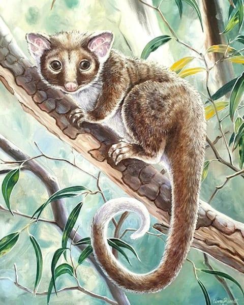 Possum-eyed - Ringtail Possum