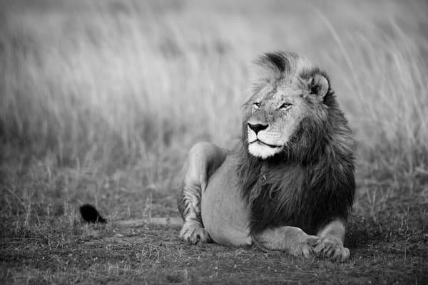 Majestic King Photography Art | Visual Arts & Media Group Corporation