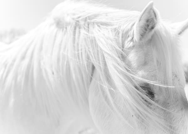 Windswept  ( Black & White ) Photography Art | Visual Arts & Media Group Corporation