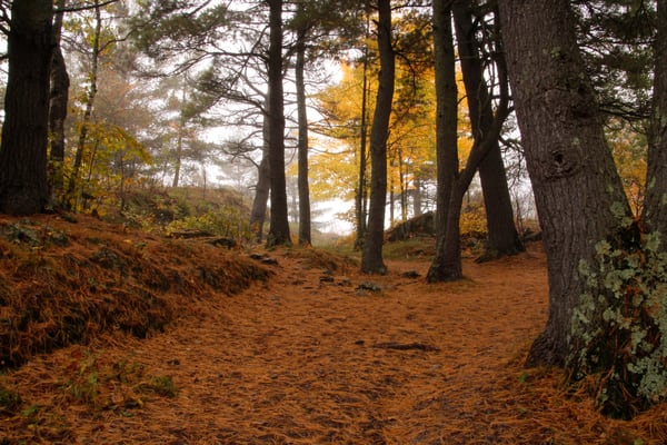 Northern Forest Floor In Autumn Photography Art | Lauramarlandphoto.com