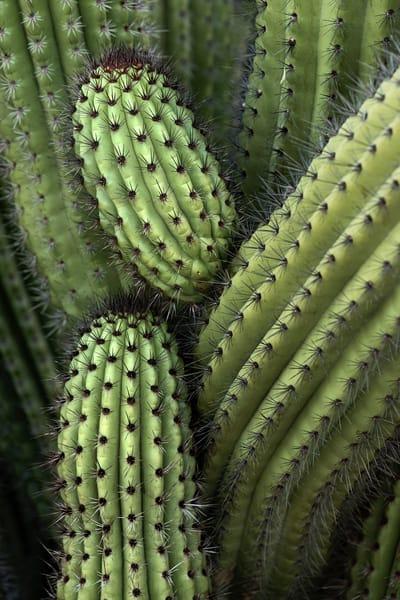Cactus Maze Photography Art | Kendall Photography & Fine Art