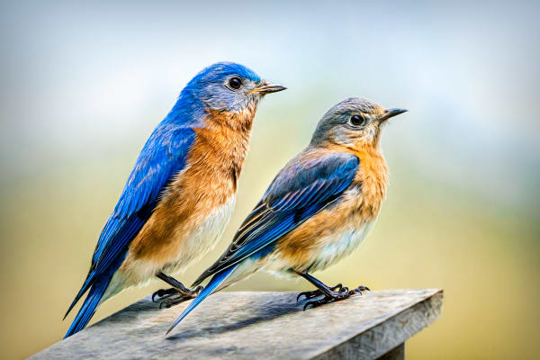 Nothing But Bluebirds All Day Long Photography Art   Trevor Pottelberg Photography