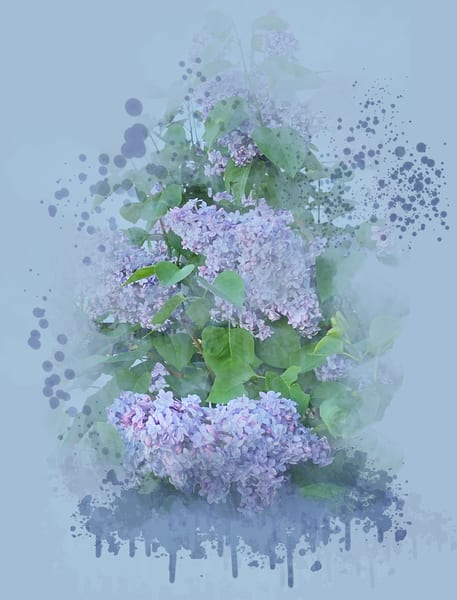 President Grivy Lilac In Peter's Garden Art | Art from the Soul