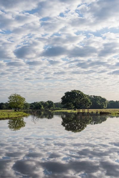 Morning Cloud Reflections, Damon, Texas