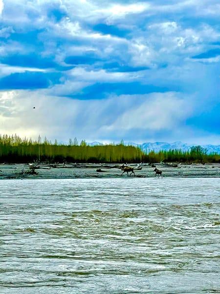 Moose Crossing Photography Art | Visionary Adventures, LLC