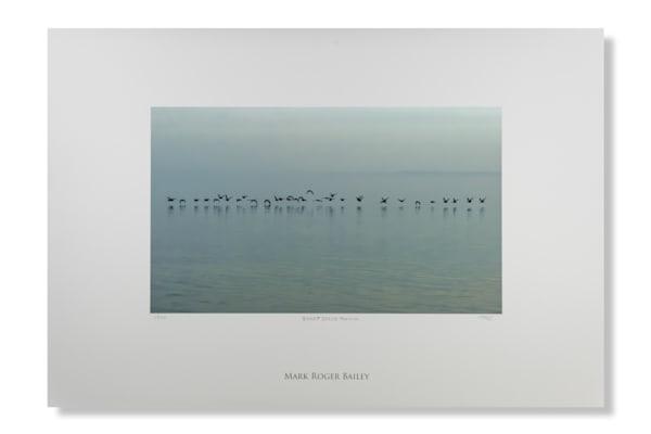 Brant Geese   Fenwick Art   Mark Roger Bailey   Fine Art Photography