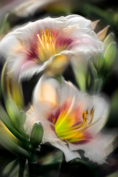 Soft Touch by photographer F.M. Kearney.