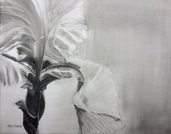 Iris, Print Art | Marie Stephens Art