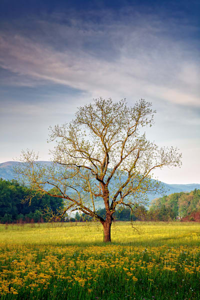Spring Glow in Cades Cove | Shop Photography by Rick Berk