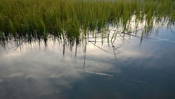 Salt Marsh Heavens