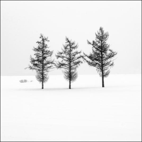 Image00118 Art | Roy Fraser Photographer